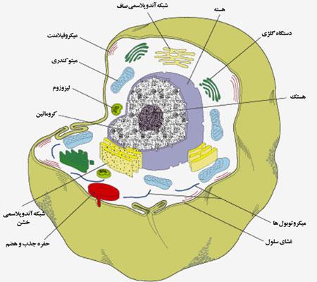فیزیولوژی سلول