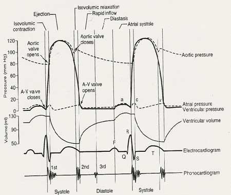 Period-heart-elmevarzesh