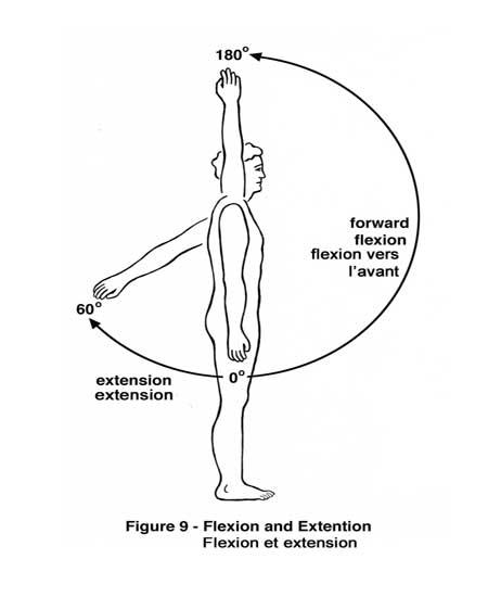 shoulder_flexion-elmevarzesh