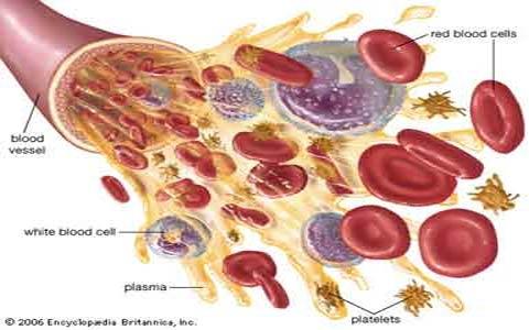 فیزیولوژی خون