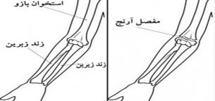 Anatomy-forearm-bones