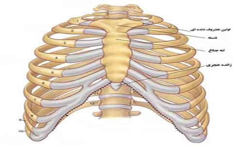 نتیجه تصویری برای استخوان جناغ سینه