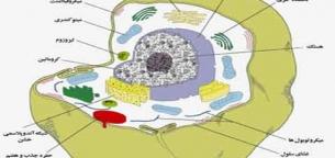 آناتومی سلول
