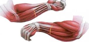 forearm-
