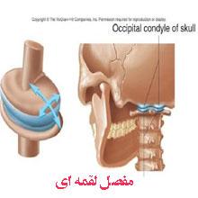 آناتومی مفصل