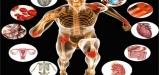 Body-Physiology
