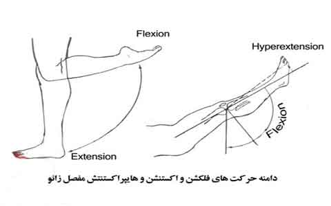 Knee-flexion-and-extension-