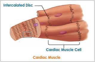 فیزیولوژی دستگاه گردش خون