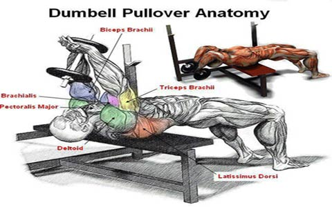 dumbell-pullover-1-elmevarzesh