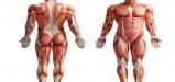 human-anatomy-