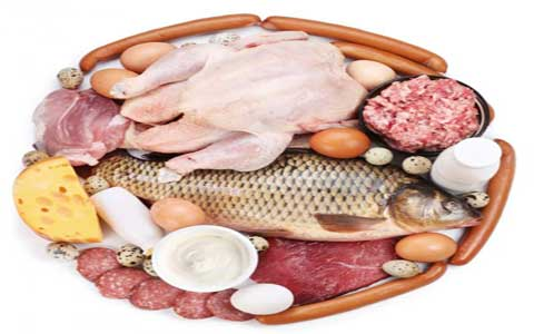protein-in-athletes-nutrition