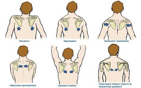 Shoulder-movements