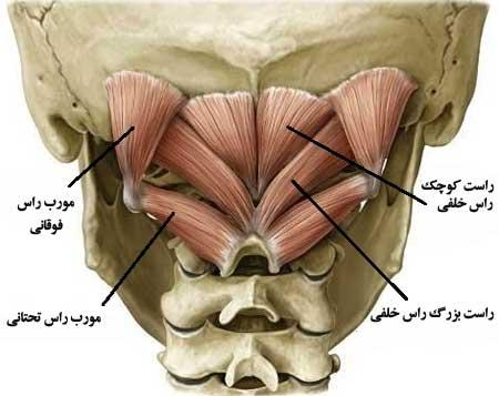 suboccipitals-elmevarzesh