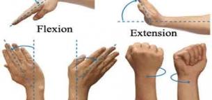 wrist-flexion-extension-