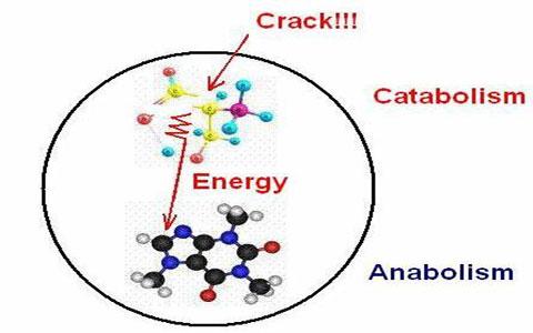 metabolism anabolism catabolism سوخت و همچنین ساز سلول آنابولیسم و همچنین کاتابولیسم
