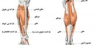 Calf-Muscles-