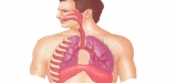 Respiratory-System-2-elmevarzesh