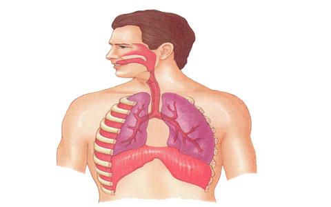 آناتومی دستگاه تنفس