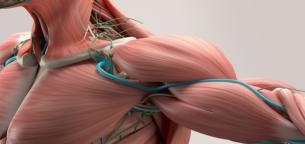 دیستروفی عضلانی چیست؟ انواع آن و روشهای درمان دیستروفی عضلانی