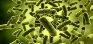 پروبیوتیک چیست و آیا پروبیوتیک به ریکاوری بعد از ورزش کمک میکنند؟