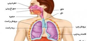 فیزیولوژی دستگاه تنفس