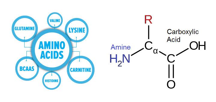 اسید آمینه (آمینو اسید) چیست؟ اسید آمینه ضروری و غیر ضروری چه تفاوتی با هم دارند؟