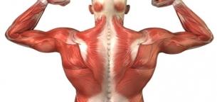 Image result for دانلود پاورپوینت آناتومی بدن انسانی