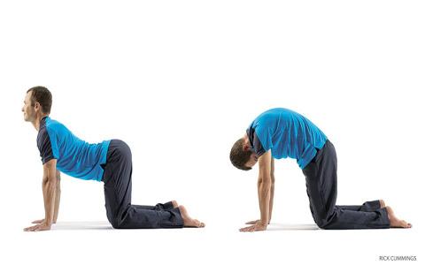 cat cow pose آموزش حرکات یوگا جهت کاهش استرس و همچنین افزایش اقتدار و قدرت