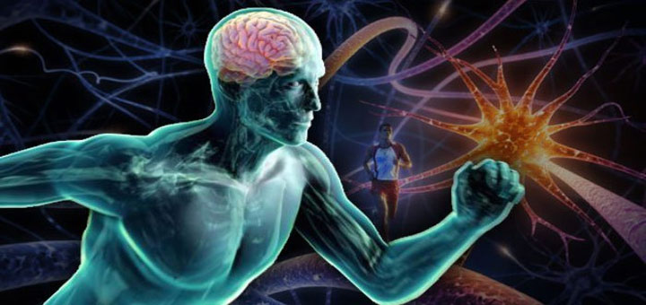 ورزش چگونه باعث کاهش تولید گلوتامات در مغز می شود؟