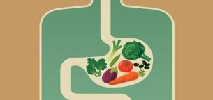 نقش باکتریهای روده در مصرف غذا چیست؟
