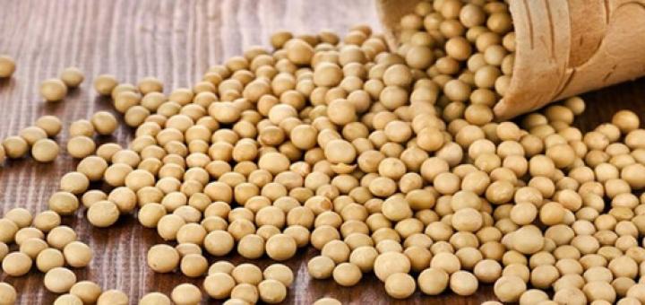 پروتئین سویا چه فوایدی دارد؟ آیا مصرف آن برای مردان خوب نیست؟