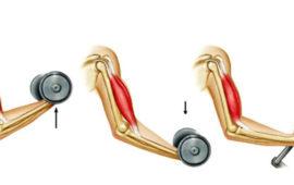 انواع انقباض عضله